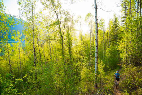 Mountain biking in beautiful green forest